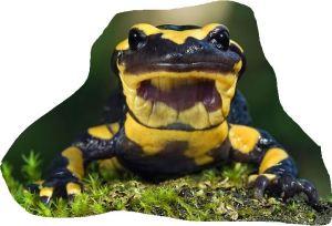 Pre School Story Time - salamander